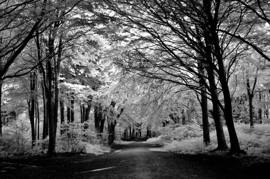 gallery_ghosts_11_Gibbet_Piece_Witton_Woods_Bloody_Will_Suffolk